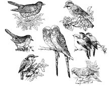 Bird Clip Art Pictures - Design Image Source
