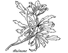 Anemone Flower Clip Art - Design Image Source