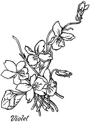 Violets Clip Art Picture - Design Image Source