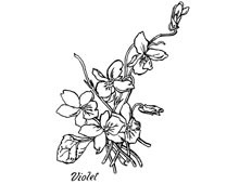 Violets Clip Art Picture - Design Image Source