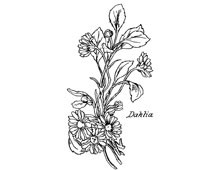 Dahlia Clipart - Design Image Source