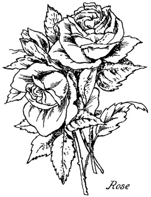 Rose Clip Art Image - Design Image Source