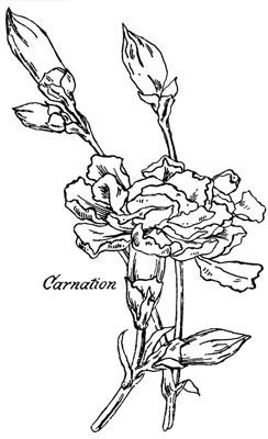 Carnation Clipart - Design Image Source