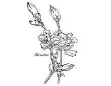 Carnation Clipart - Design Image Source