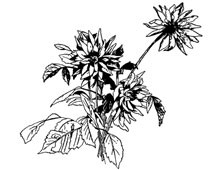Chrysanthemum Clip Art - Design Image Source