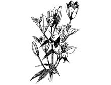 Clipart of Flowers - Design Image Source