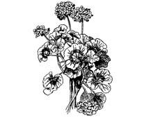 Geranium Clipart