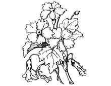 Small Carnations Clip Art