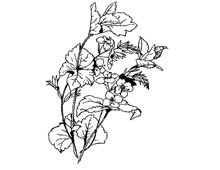 Clipart of Flowers and Leaves