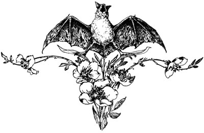 Clipart of a Bat and Flowers