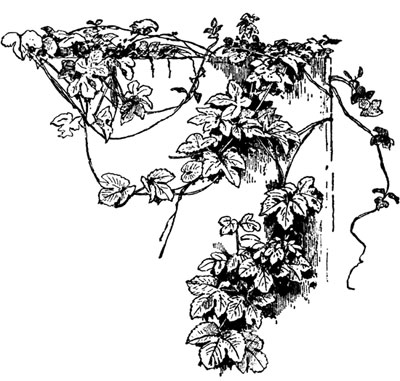 Flower Corner Clip Art