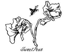 Clipart of Sweet Pea Flowers