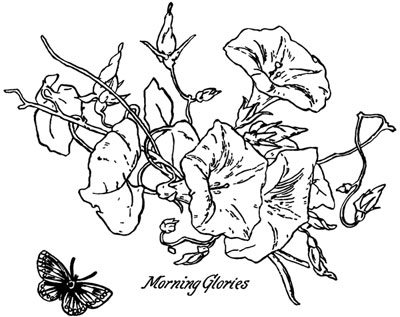 Morning Glory Flower Clipart