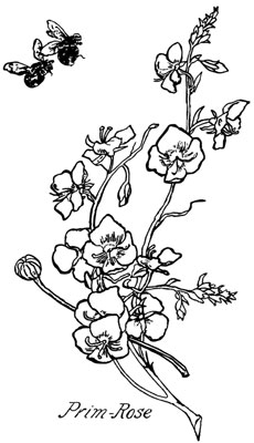 Primrose Flower Images