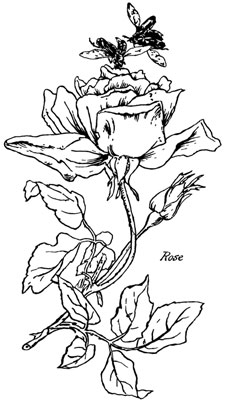 Clipart of a Single Rose