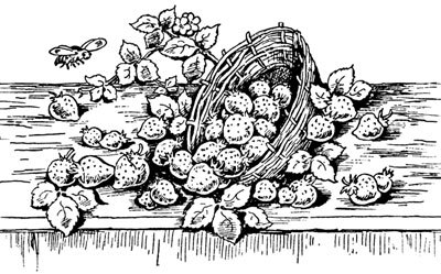 Clipart of Strawberries