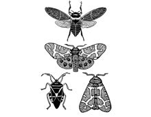 Clipart of Insects